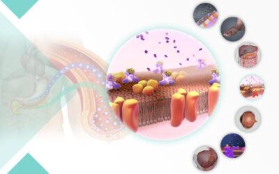 خصيصًا لأطبّاء السكّري والغدد الصمّاء: إطلاق أكبر مجموعة من المجسّم التشريحي (3D) خاصّة بالسكّري